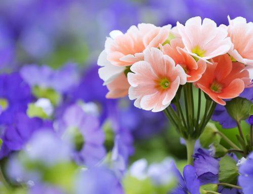 Evimize bereket getiren çiçek ve bitkiler..